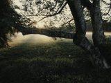 closeup photo of lone tree