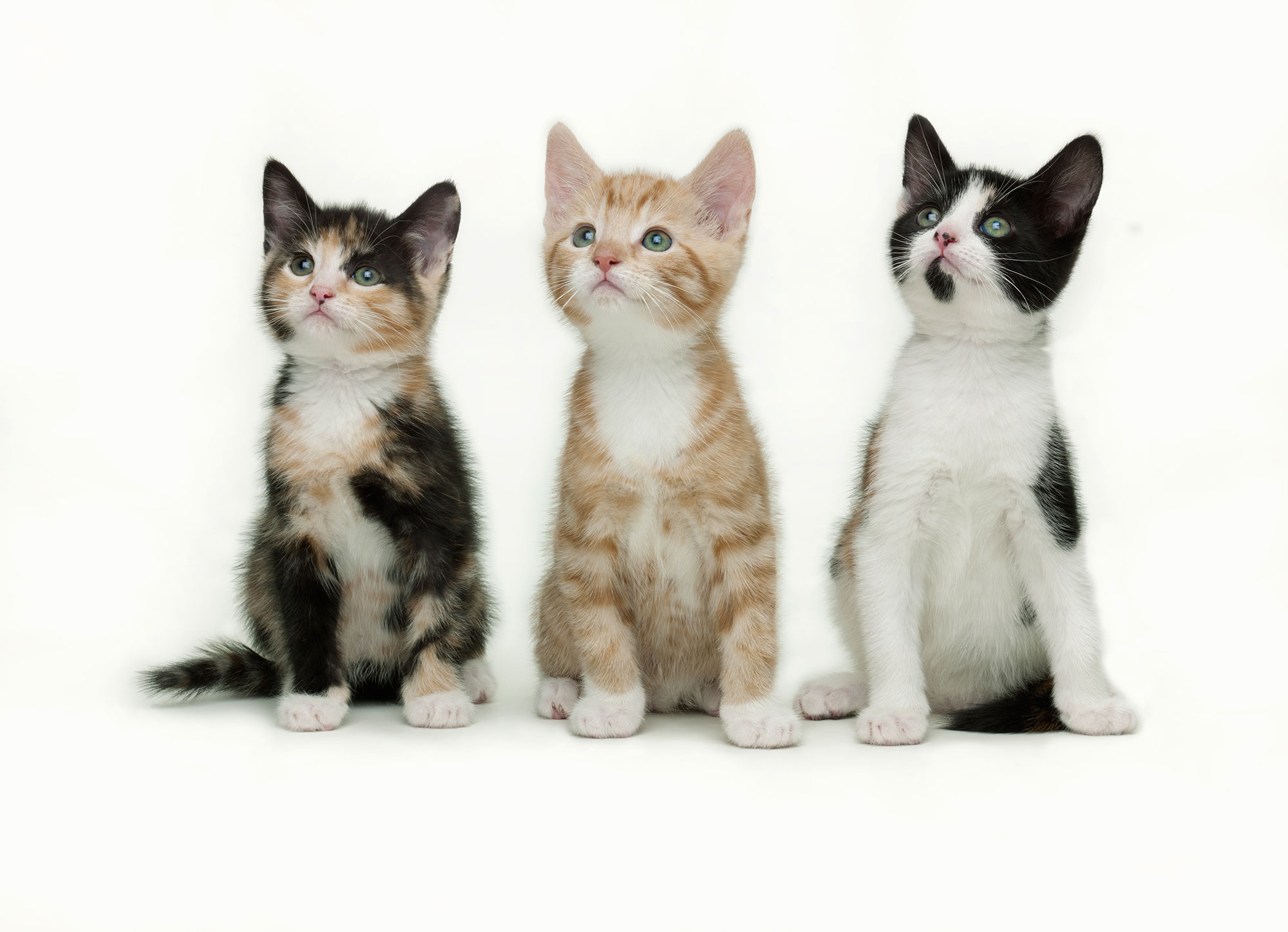 5 FACTS YOU DIDN'T KNOW ABOUT CATS!