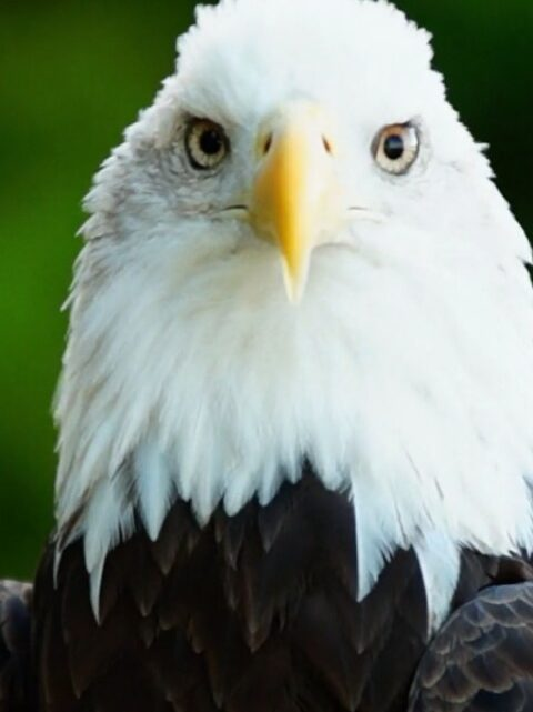 LET'S SWALLOW OUR EGOS AND LEARN FROM THE EAGLE